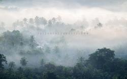 Coconut lands of Kurunegala