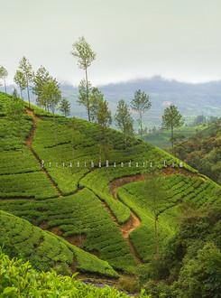 Bogawanthalawa Tea Lands