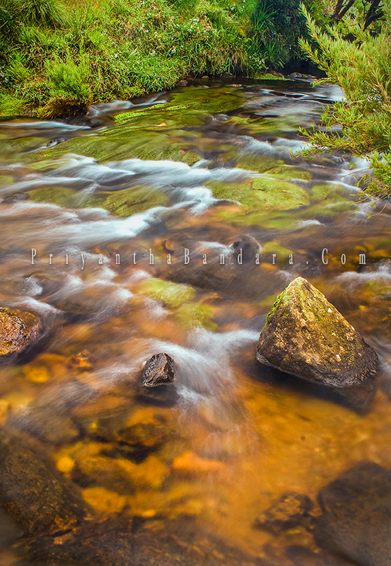 Horton Plains Stream