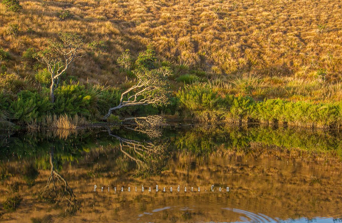 Horton Reflections