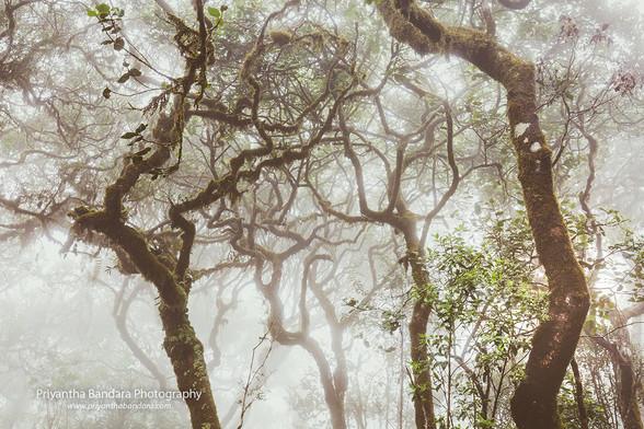 Foggy Thotupala Forest 2