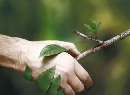 Valoração do meio ambiente