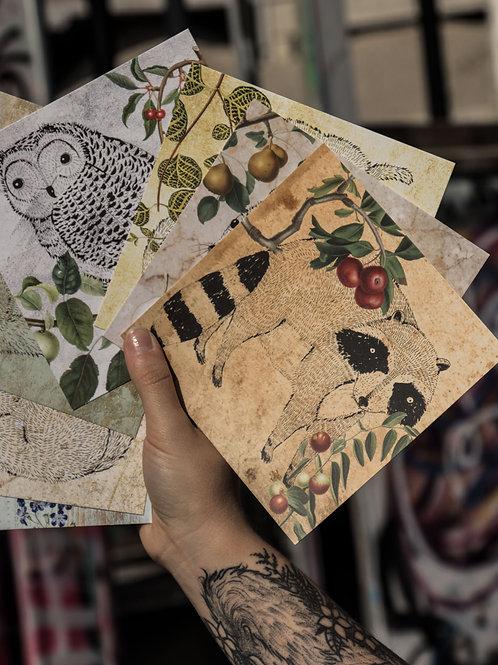 Postkarten | Stillleben der Tiere