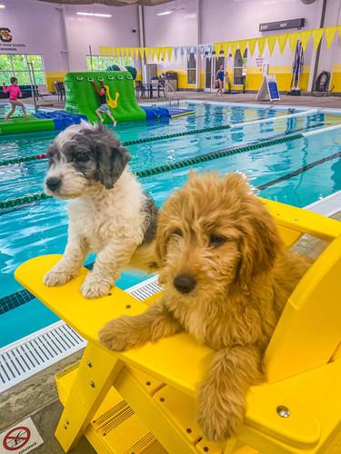 lifedogs.jpg