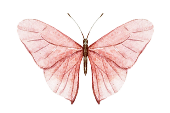 Pink Butterfly.png