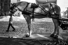 horsehead- Savannah.jpg