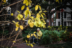 yellow- Savannah.jpg