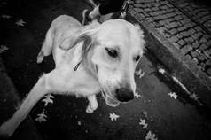 happy dog- Savannah.jpg
