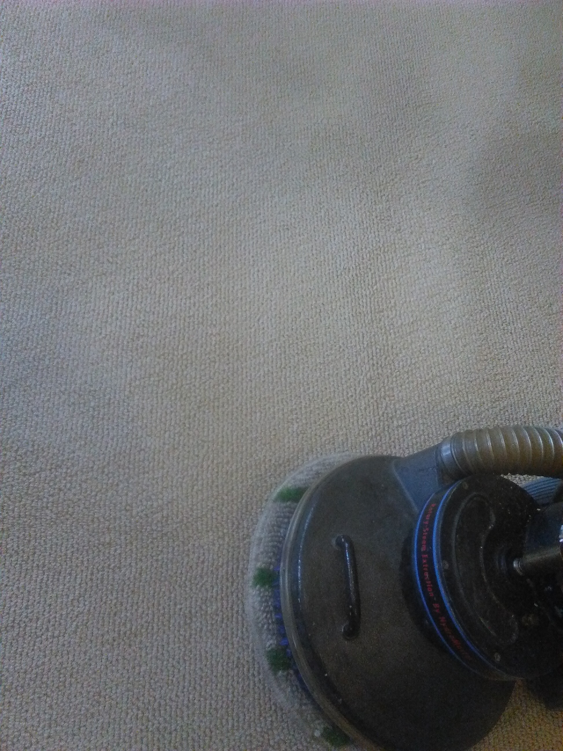 Carpet Cleaning San Jose California Two Birds Home