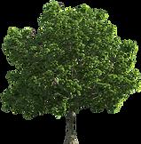Tree_Transparent_PNG_Clip_Art-1108.png