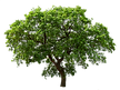 tree_PNG3498.png