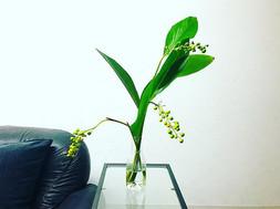 This week's flower at Sandavinci.jpg