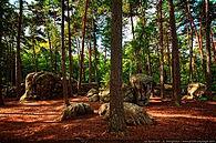 Fontainebleau.jpg
