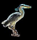 kisspng-grey-heron-seabird-sea-birds-5b2
