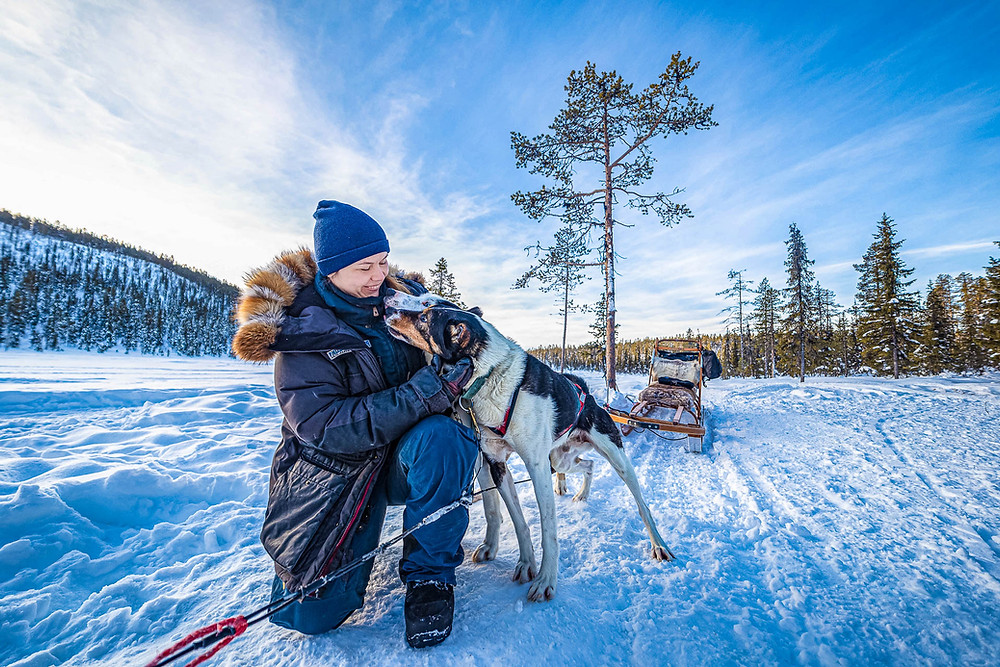 Sled dog musher cuddling sled dogs in arctic snowy landscape