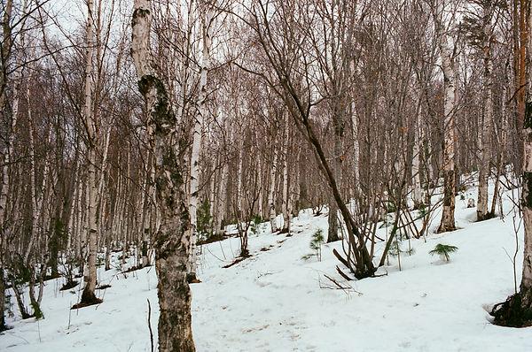 Russia Apr '18 (Ektar100)-4.jpg