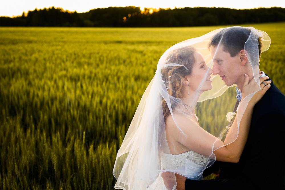 Nevěsta se ženichem pod závojem při svatebním focení v obilném poli.