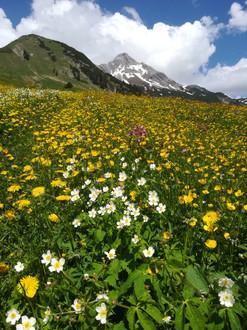 Frühling in Lechleiten