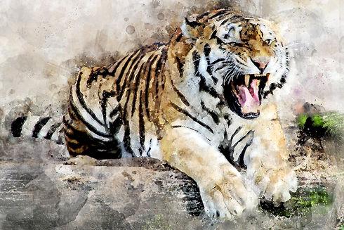 tiger-2864785_1920.jpg