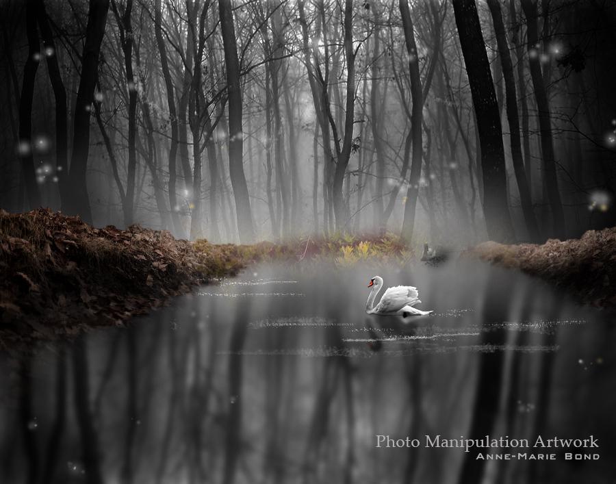 Swan Woods