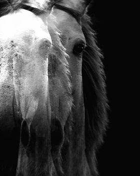 horse-WXAHTSJ_edited.jpg
