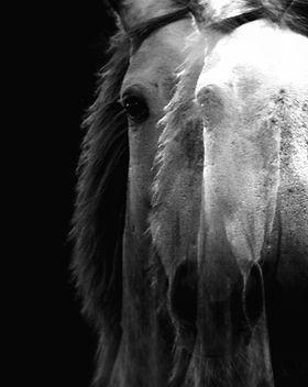 horse-WXAHTSJ.jpg