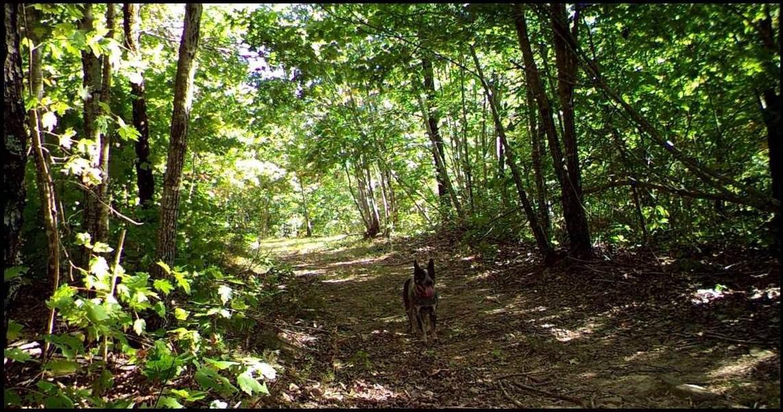 Walking Trails on Property