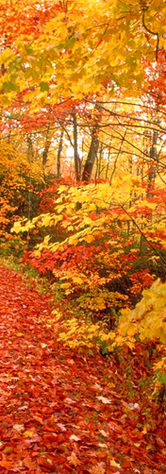 Area Seasons