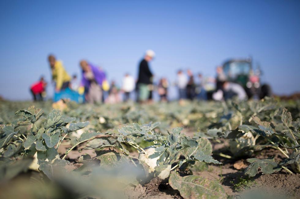 06-Gleaning.jpg