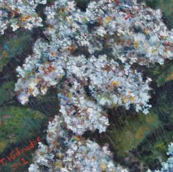 """""""White Lilacs"""""""