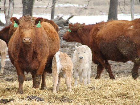 ECONOMIC BENEFITS OF LIVESTOCK PRODUCTION