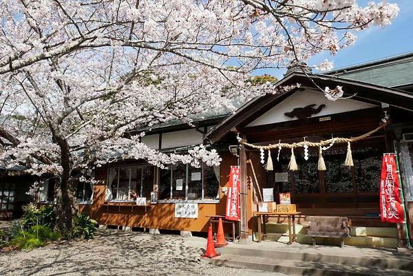 桜と祈祷殿 真野寺.jpg