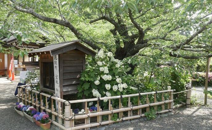 6 真野寺 境内 花の寺.jpg