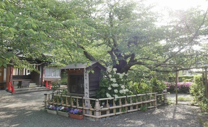 3真野寺 境内 花の寺.jpg