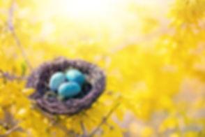 spring-4179311_1920.jpg