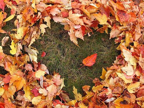 autumn-1712756_1920.jpg