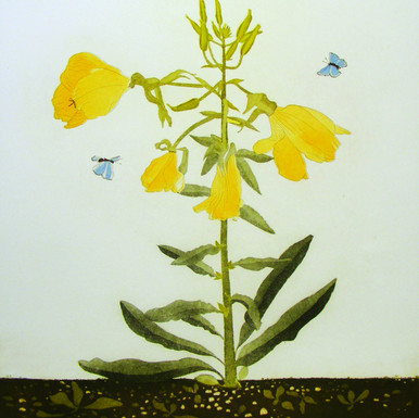 Evening Primrose with Common Blue