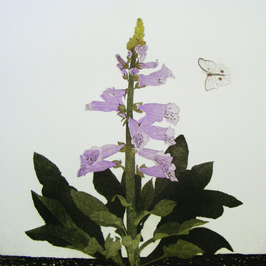 Foxglove with Large White