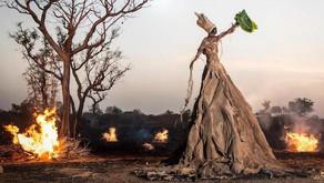 Global environmental art exhibition sends important message