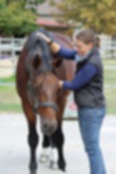 Craniosacral Omnipathie Pferd