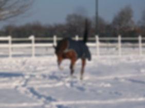 Tierkommunikation Tierkinesiologie Kolik Op Kann nicht alleine auf der Koppel bleiben Angst Osteopathie Pferdephysiotherapie reiki