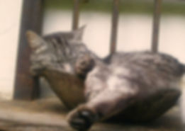 Auch Katzen entspannen nach einer Cranio