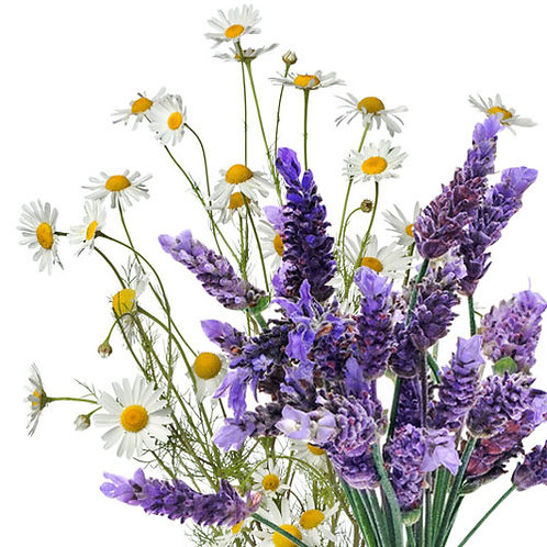 LAVENDER CHAMOMILE - Fragrance Oil