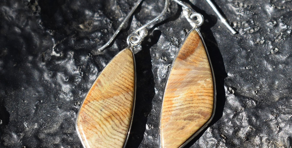 Petrified Wood - Hampton Butte Oregon | 925 Sterling Silver | Earrings