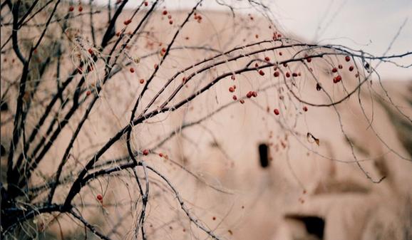 by Eda Elif Tibet