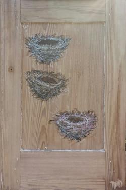 Live Nests