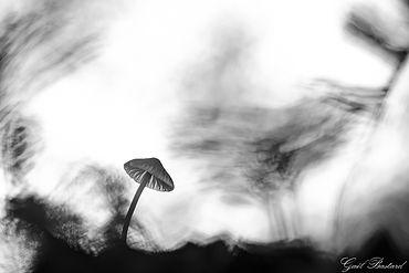 Ombrelle-2.jpg
