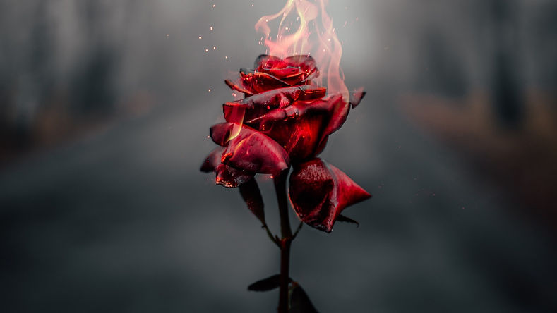 rose-flower-fire-burning-dark-1920x1080-
