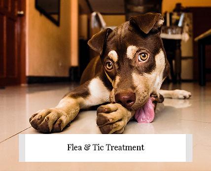 greener-pet-flea-tic-treatment-w600.jpg