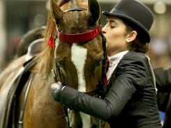 Highlighting Heart Horses